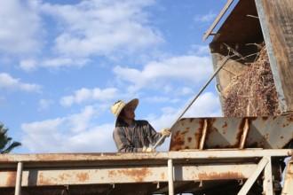 Changing Season: On the Masumoto Family Farm.