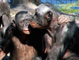 monkeylove by downing.amanda via Flickr/Creative Commons.