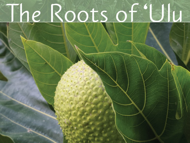 """The history of """"ulu"""" (breadfruit) and present day efforts to utilize this iconic tree for cultural preservation and  food sustainability practices."" Directed by Matt Yamashita and John Antonelli."
