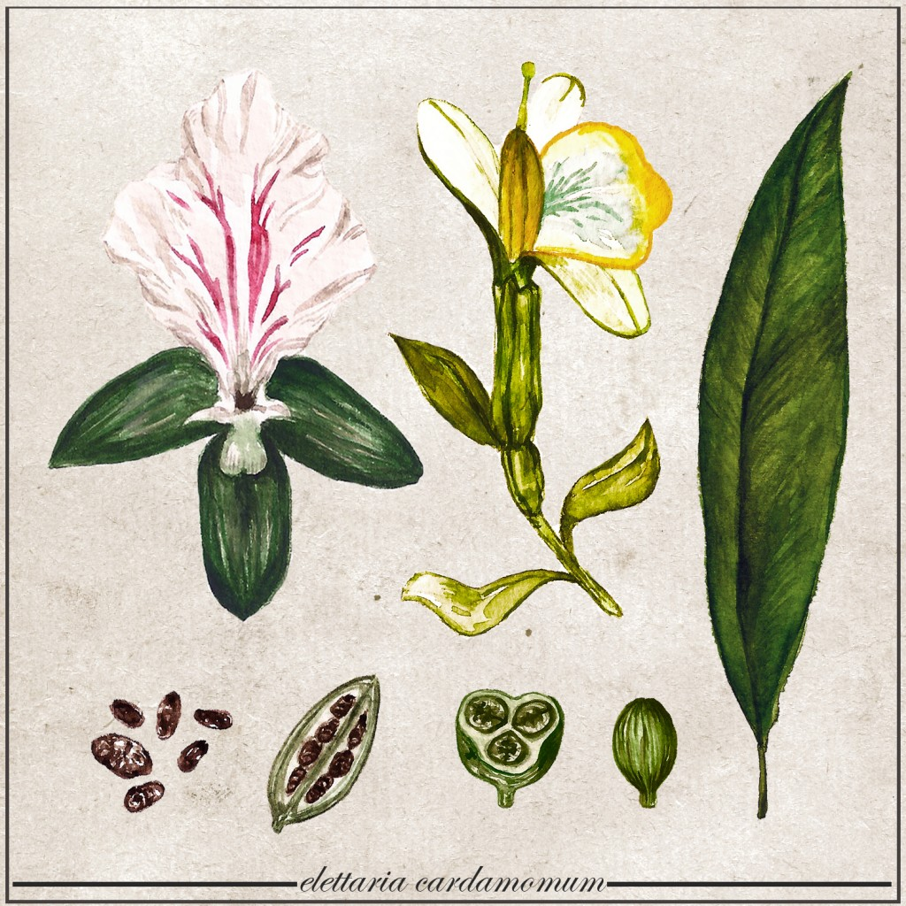 Plant Profile  Cardamom And Curry