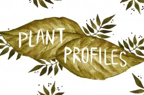 PlantProfilesConcept3.5