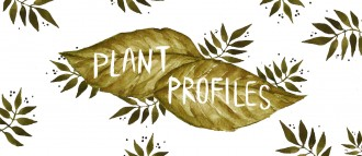 PlantProfilesConcept3.5